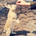 ウサギの島(大久野島)を訪問する前に知っておくべきこと(2019年春版)